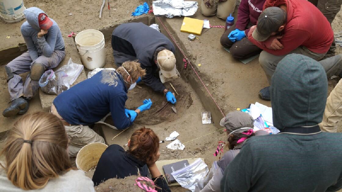 L'arrivée des premiers humains en Amérique racontée par l'ADN d'un nourrisson
