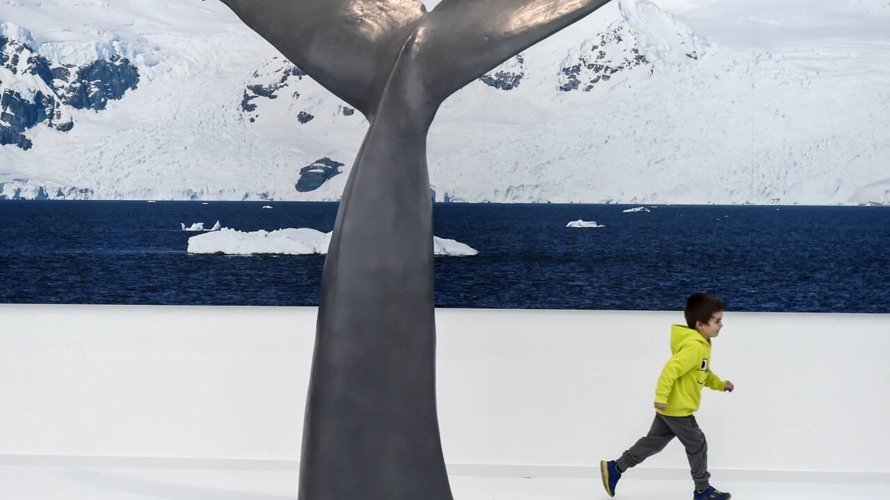 Explorer la banquise à l'Espace des mondes polaires