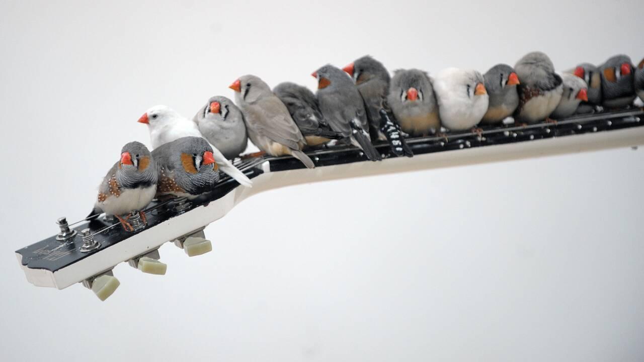 """""""Il fait chaud dehors, bébé"""": pourquoi des oiseaux chantent à leurs oeufs"""