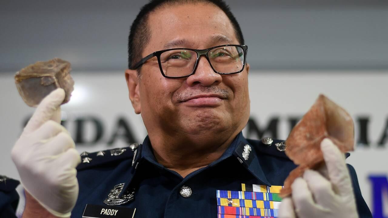 Saisie record d'écailles de pangolin en Malaisie
