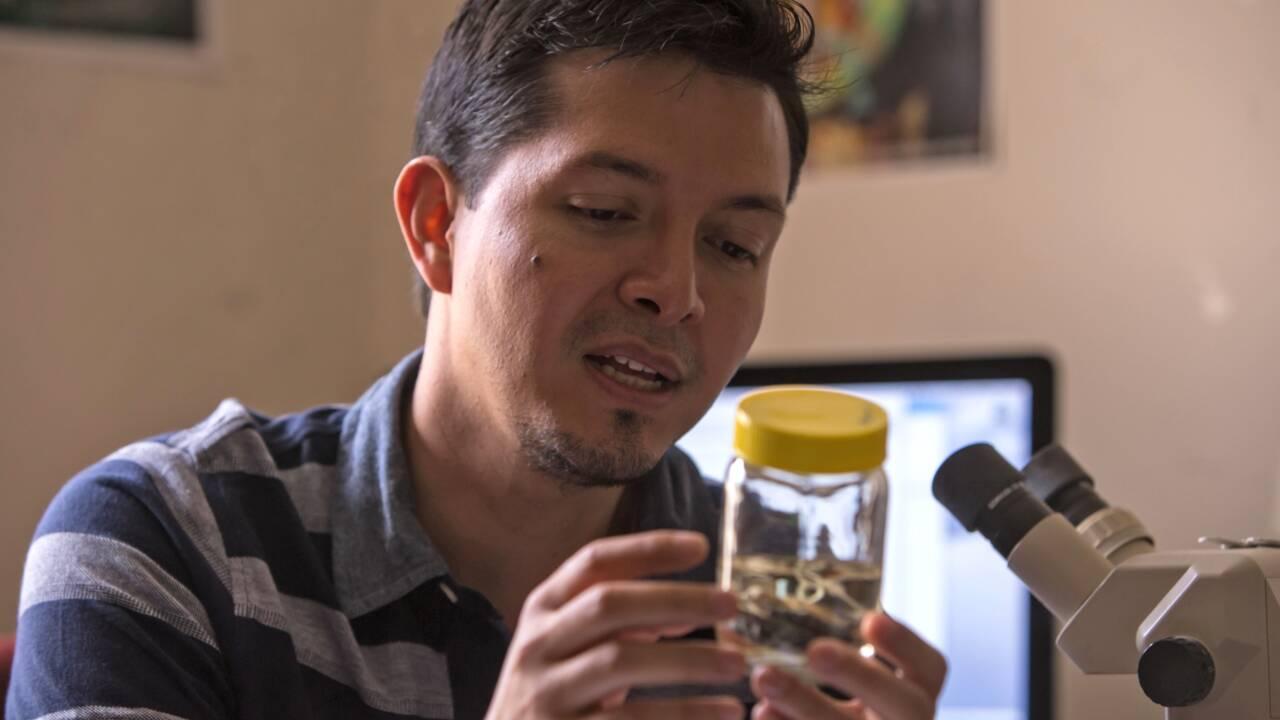 Equateur: une grenouille de verre méconnue dans son bocal de formol