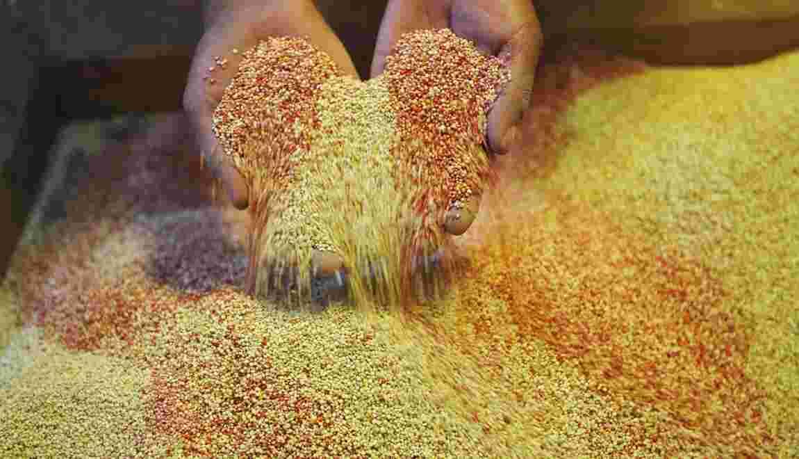 Le génome du quinoa décrypté, sa culture devrait être facilitée