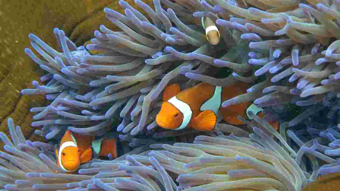 Le Japon surveille ses coraux en raison de soupçons de braconnage chinois