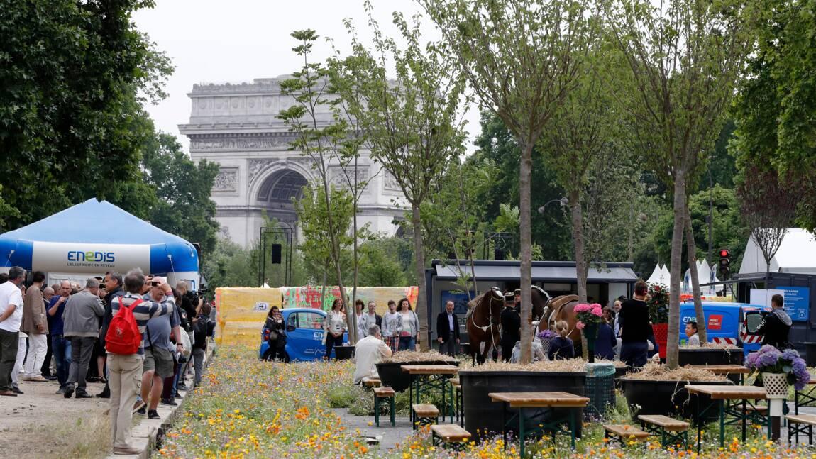 Biodiversité: des vaches au centre de Paris en juin