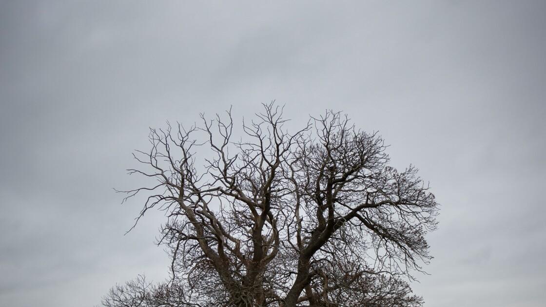 Environnement: 60.065 espèces d'arbres dans le monde