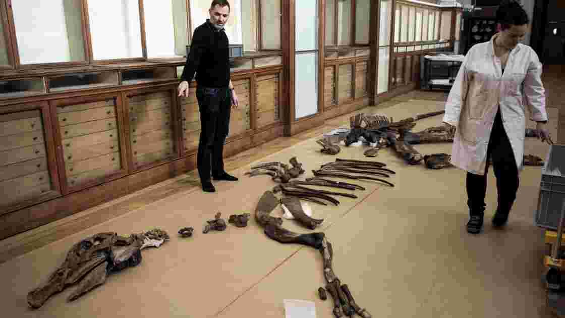 """Au Muséum de Paris, l'art et la manière de """"remonter"""" un dinosaure"""