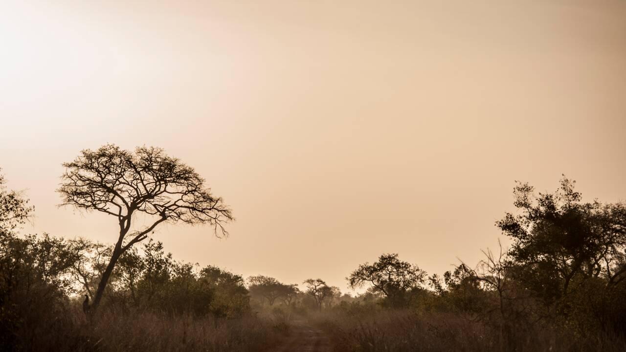 Au nord du Bénin, le parc national de la Pendjari reprend vie