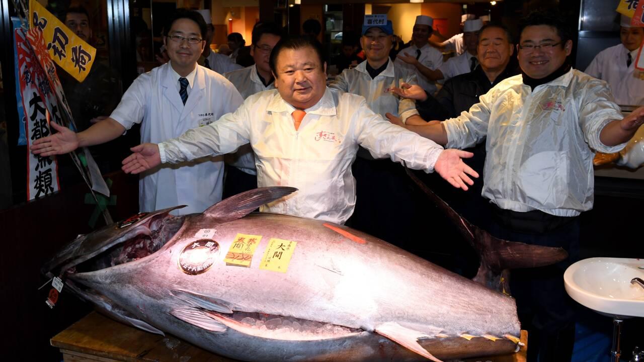 Japon: un thon rouge à 605.000 euros à la première criée 2017