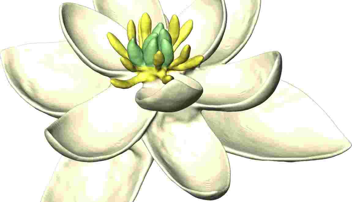 La toute première fleur était hermaphrodite