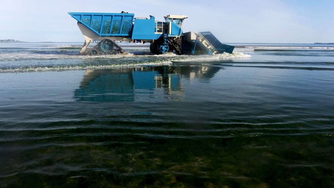 Algues vertes en Côtes-d'Armor: plages fermées, nouvelles zones à risque