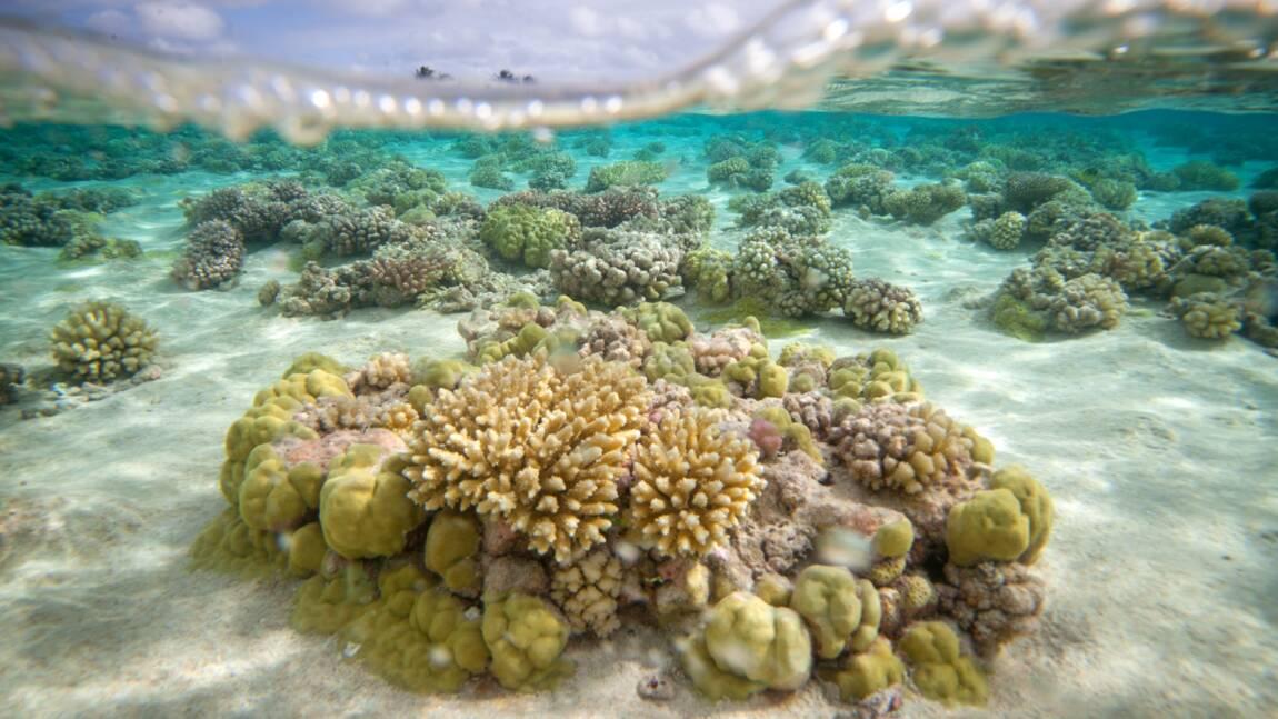 La santé des récifs coralliens menacée par les déchets plastiques