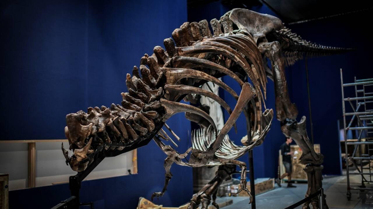 Des fouilles aux expos, la passion d'un paléontologue pour les dinosaures