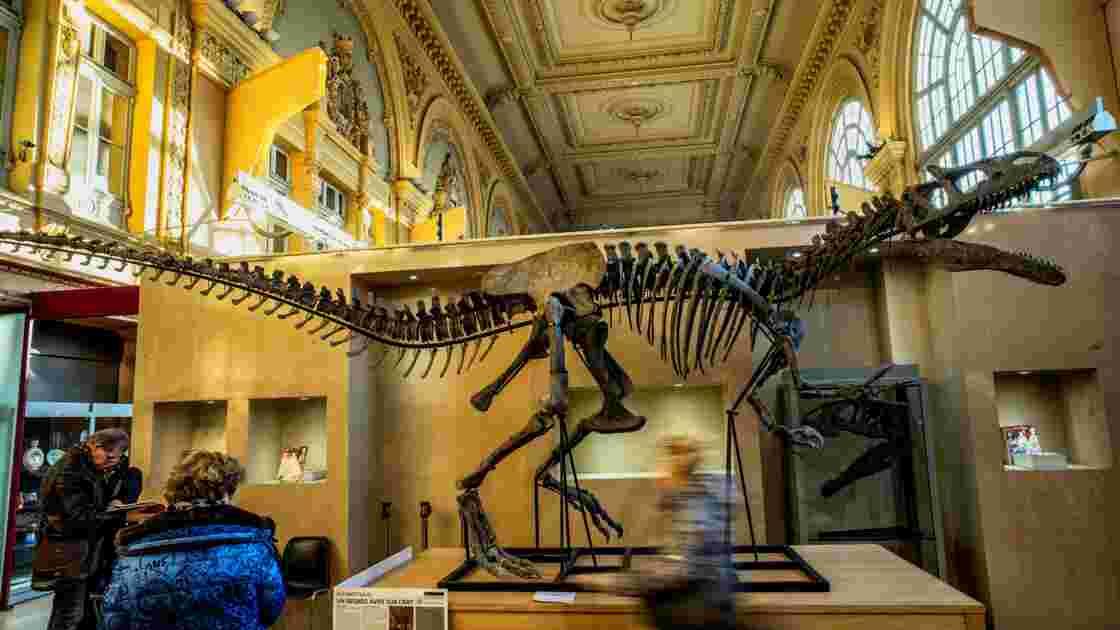 Un squelette presque complet de  dinosaure adjugé 1.128.000 euros à Lyon