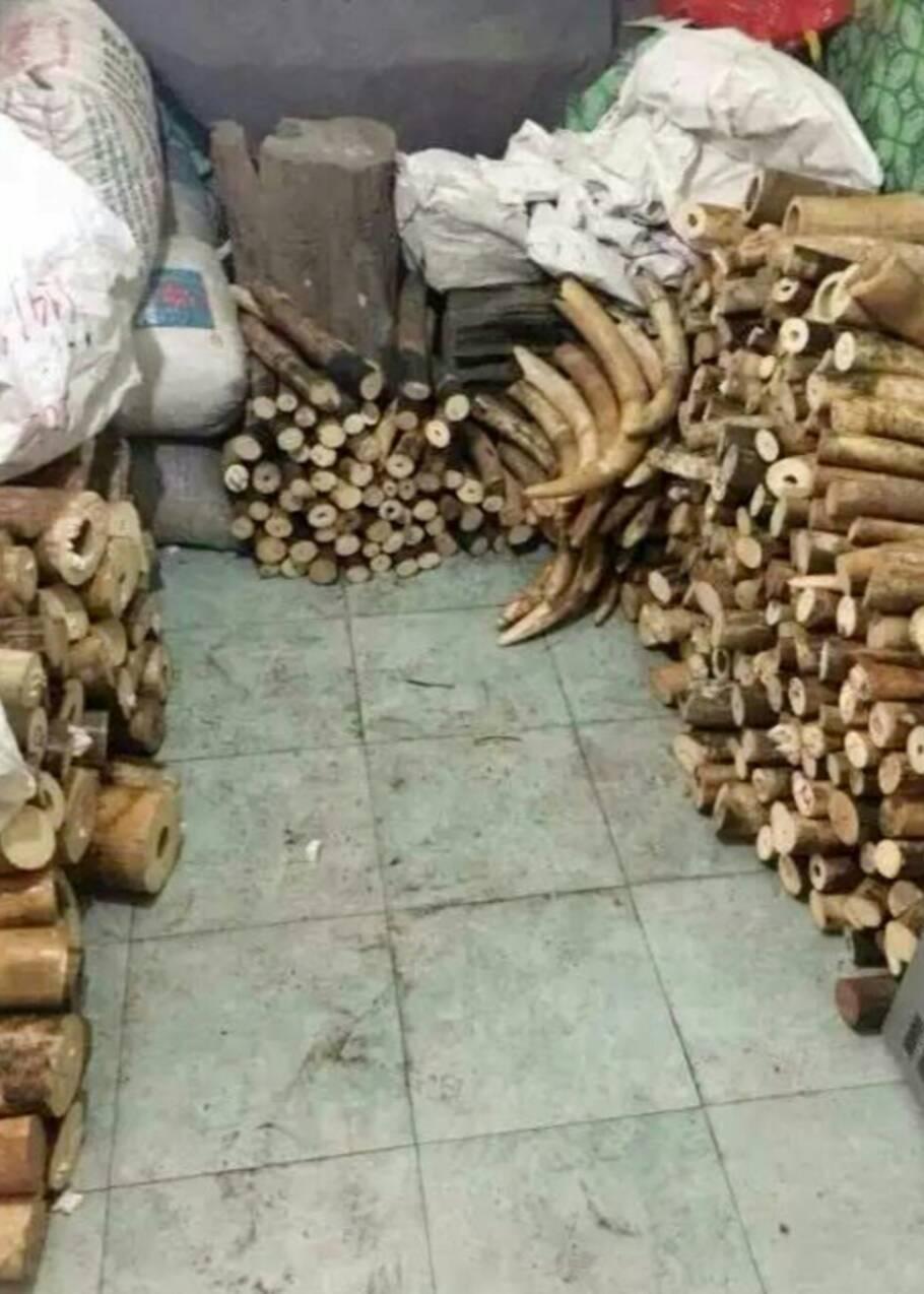 Trafic d'animaux sauvages: un village vietnamien sur la sellette
