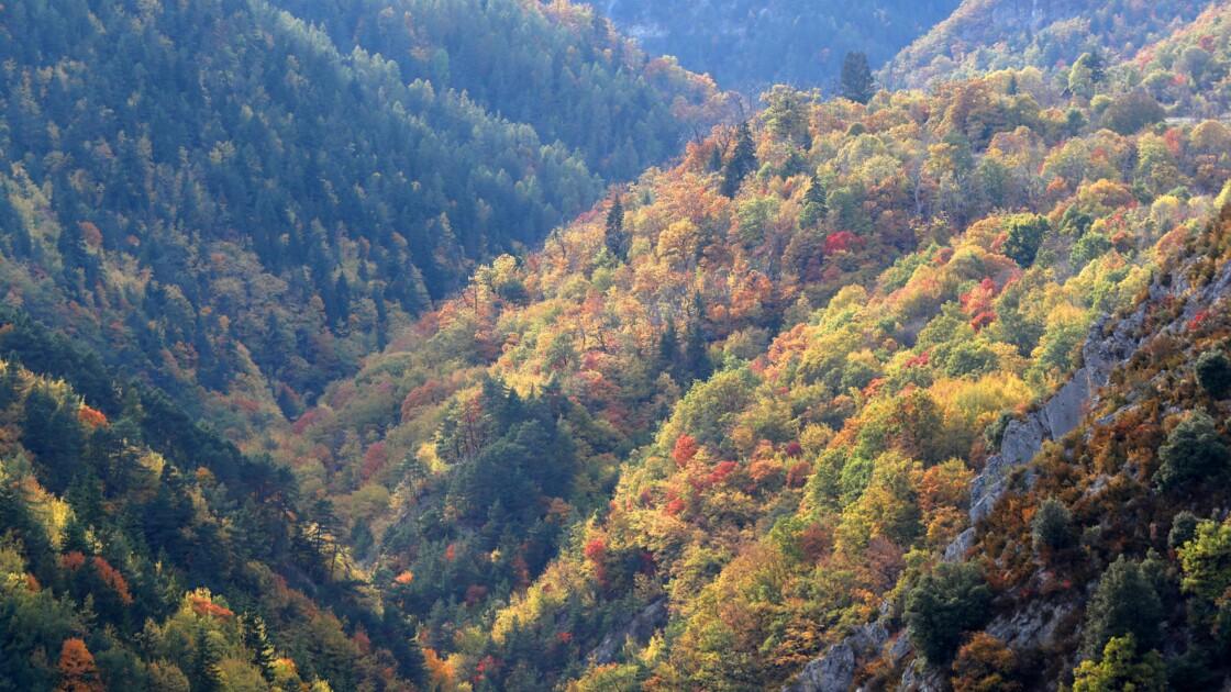 """Reforestation: un appel à projets pour """"planter un million d'arbres"""""""