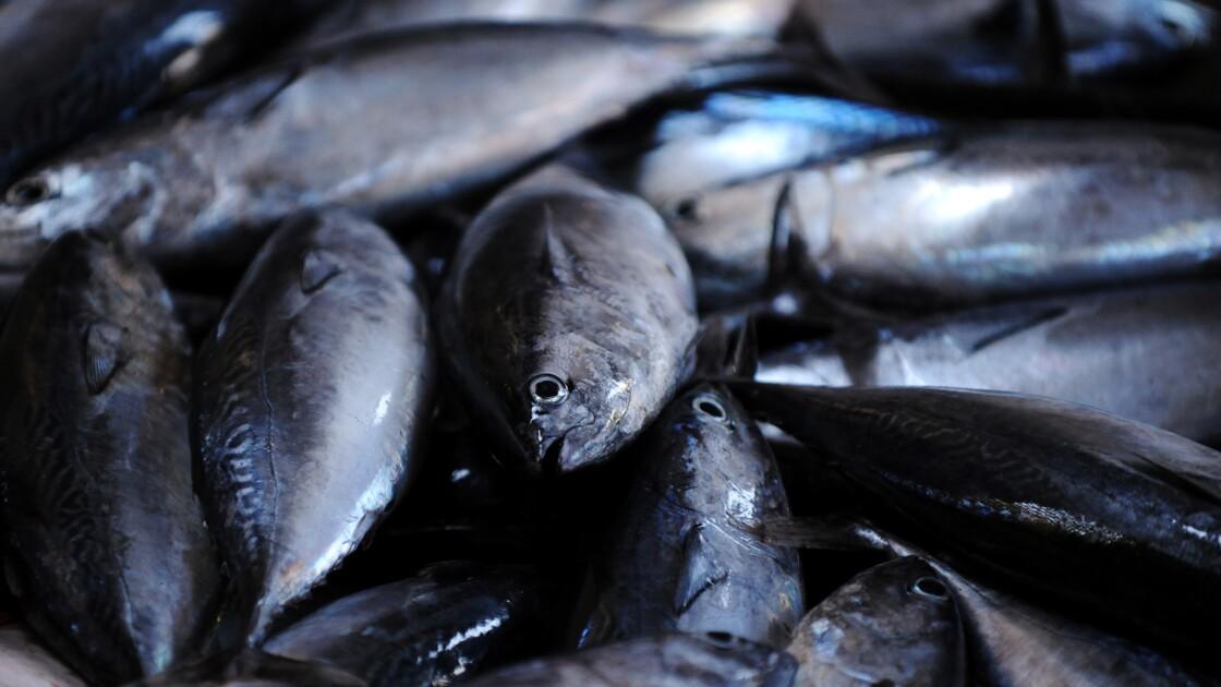 Pêche illégale: importations UE pas assez contrôlées