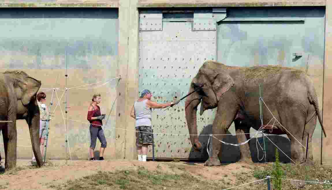 Animaux en captivité: les cirques traditionnels veulent rencontrer Hulot