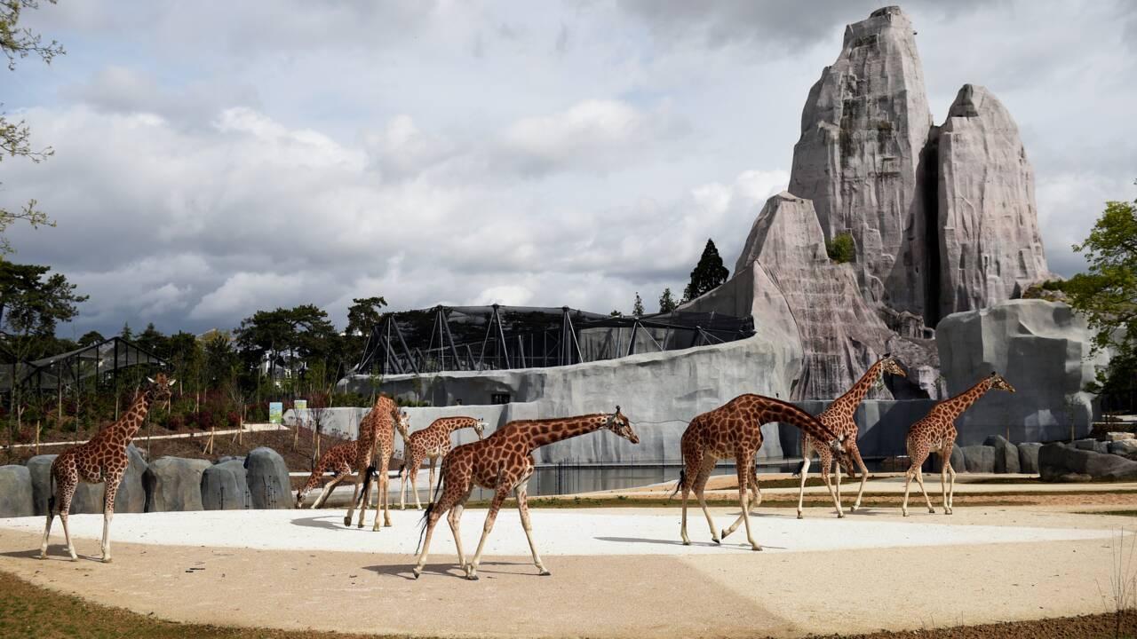 Le zoo de Vincennes plombe les comptes du Muséum d'histoire naturelle