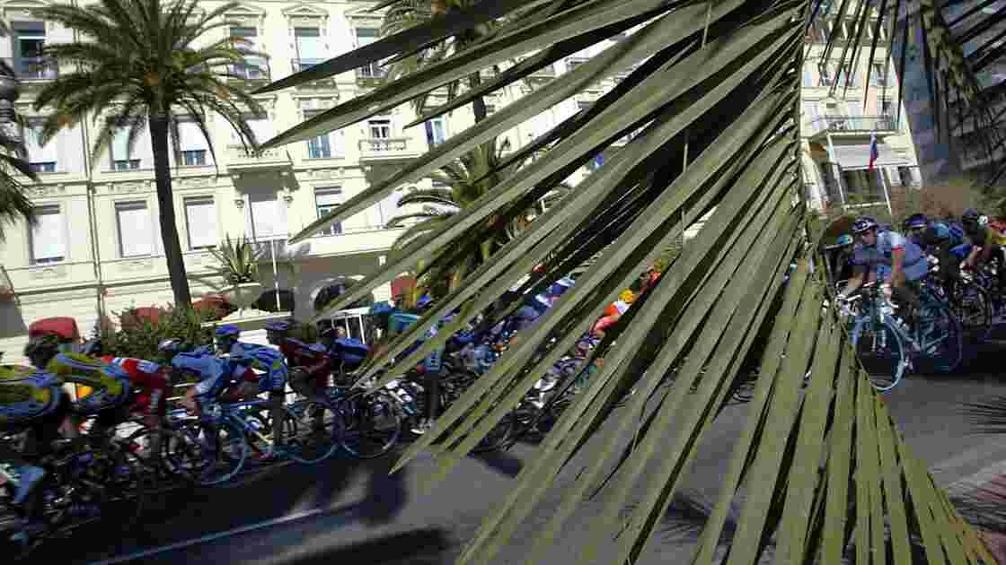 """Nice défend une """"solution 100% naturelle"""" pour sauver ses palmiers"""