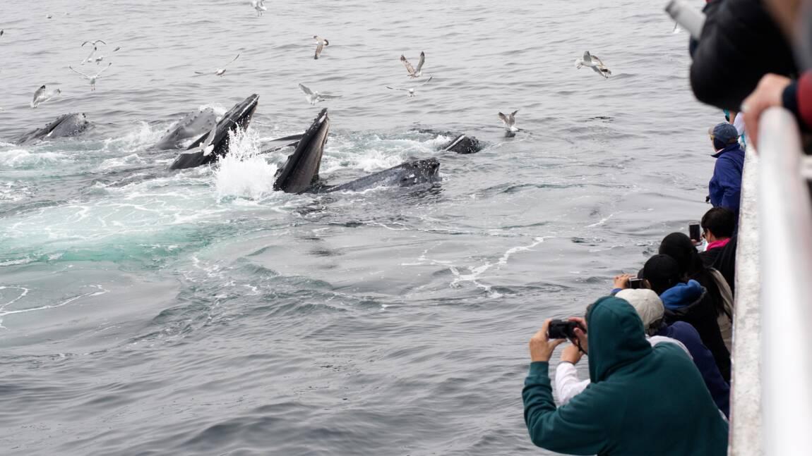 Des baleines plein la vue au large de Boston