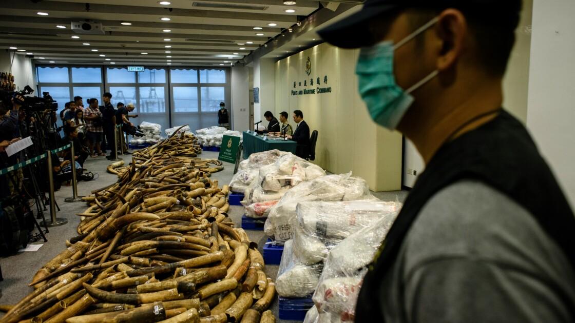 Ivoire: Hong Kong annonce sa plus grosse saisie en 30 ans