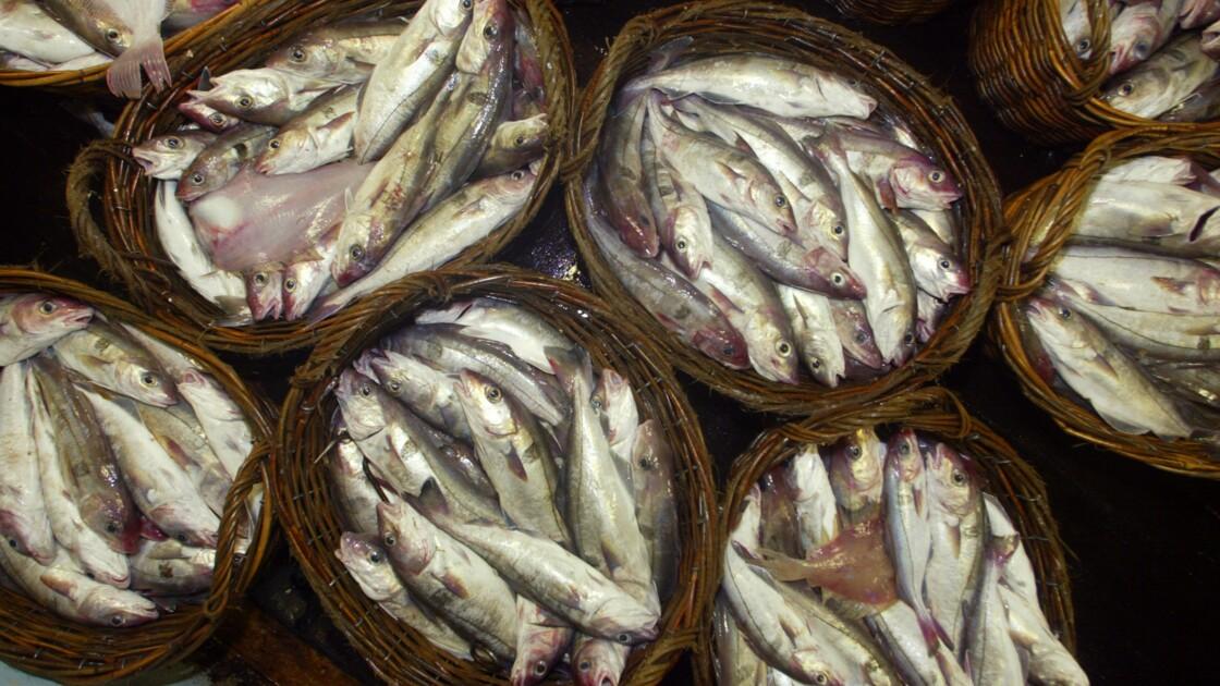 Plancton décimé, poissons sonnés: les effets du vacarme sous-marin créé par l'homme