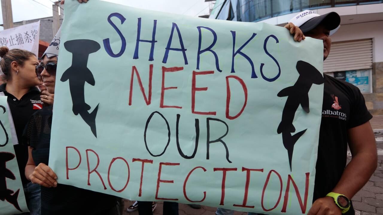 """Les Galapagos """"en deuil"""" contre la pêche illégale d'une flotte chinoise"""