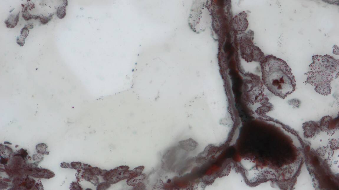 Découverte de microfossiles vieux de quelque 4 milliards d'années