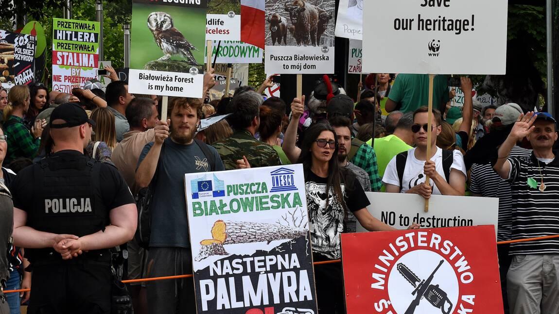 Forêt de Bialowieza: la justice européenne ordonne à la Pologne de suspendre les coupes
