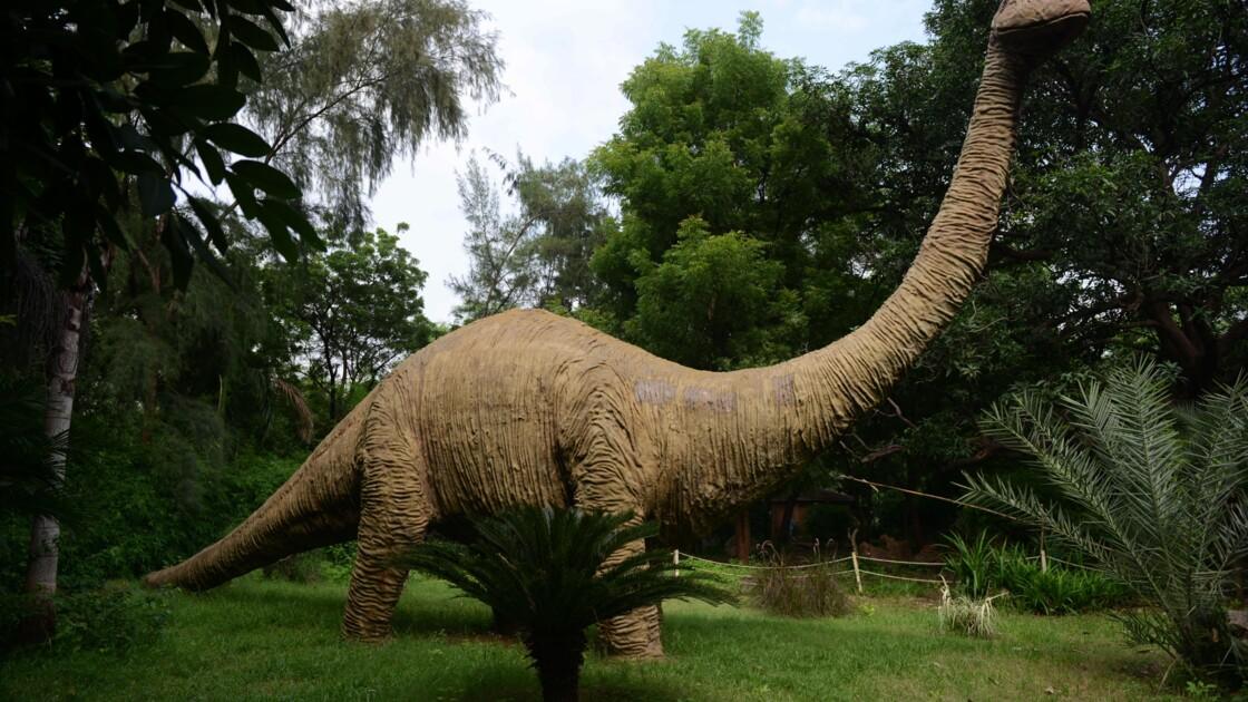 """Clin d'oeil à """"Jurassic Park"""": une queue de dinosaure retrouvée dans de l'ambre"""