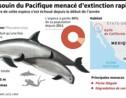 Mexique: le marsouin du Pacifique pourrait disparaître en 2018