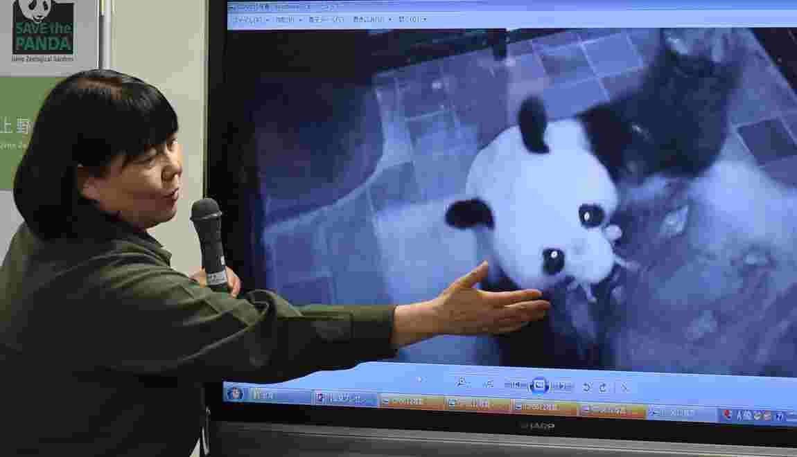Le bébé panda né au Japon se porte bien