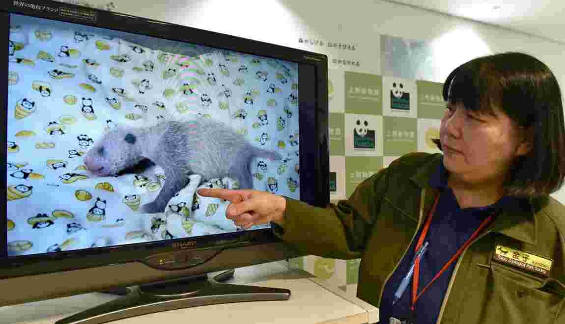 """""""C'est une fille!"""": le zoo de Tokyo annonce le sexe de son cher bébé panda"""