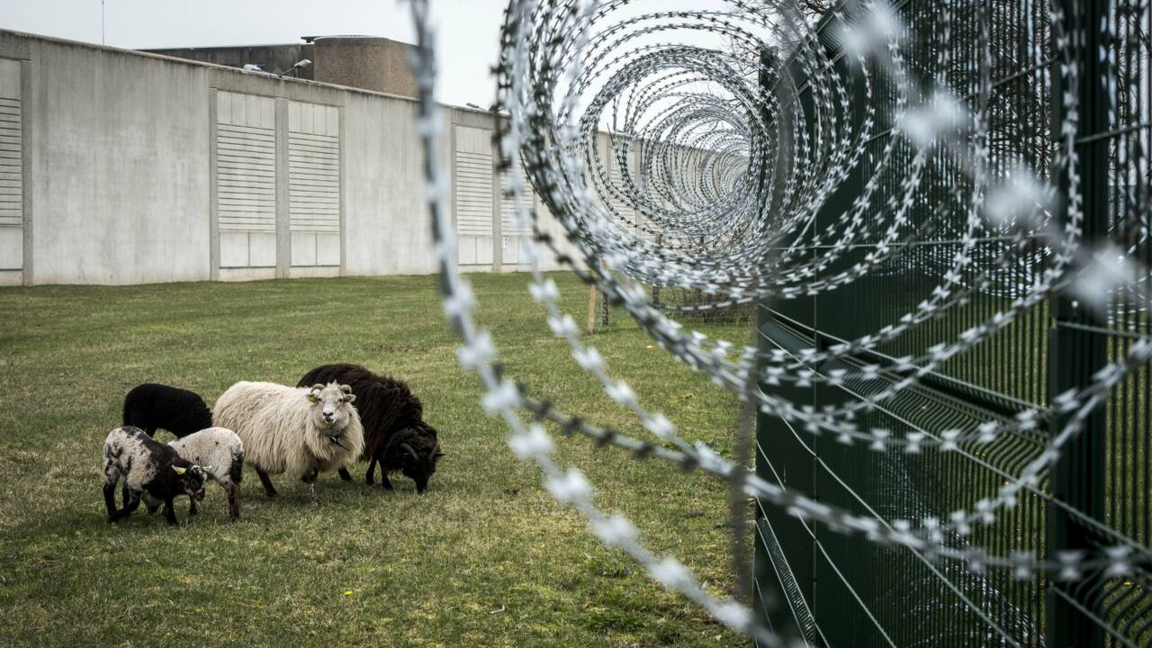Des moutons au pied d'une prison, échappée bucolique en Isère