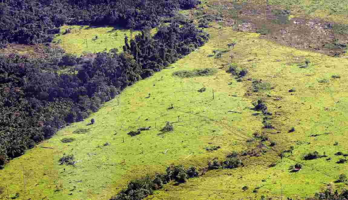 Forêt d'Amazonie: les écologistes fulminent