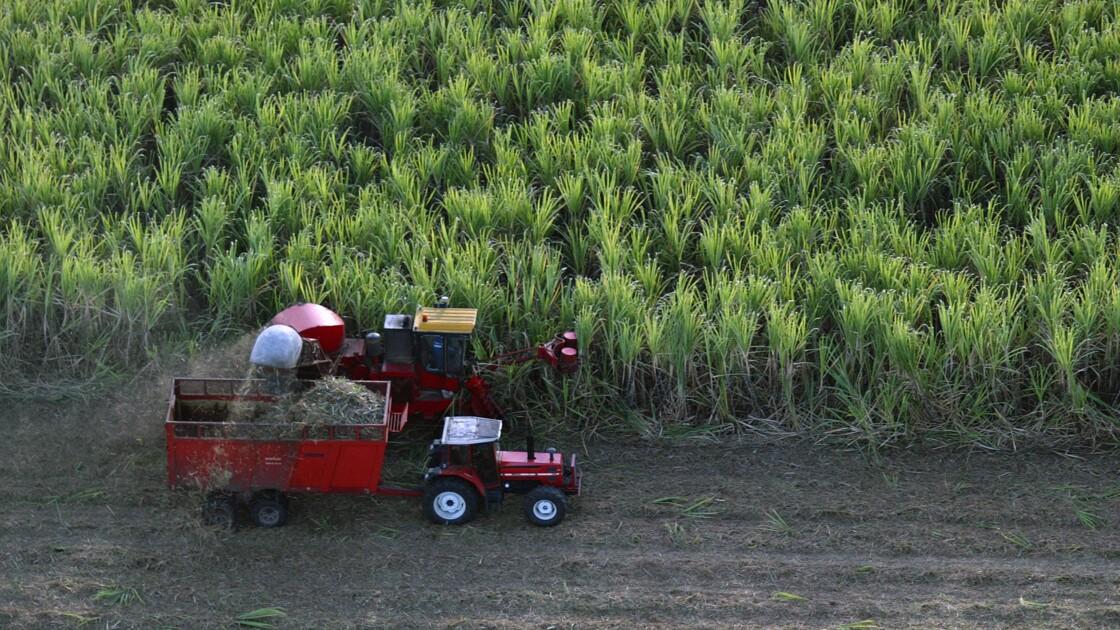 Les aides publiques débloquées pour l'usine de sucre de Marie-Galante