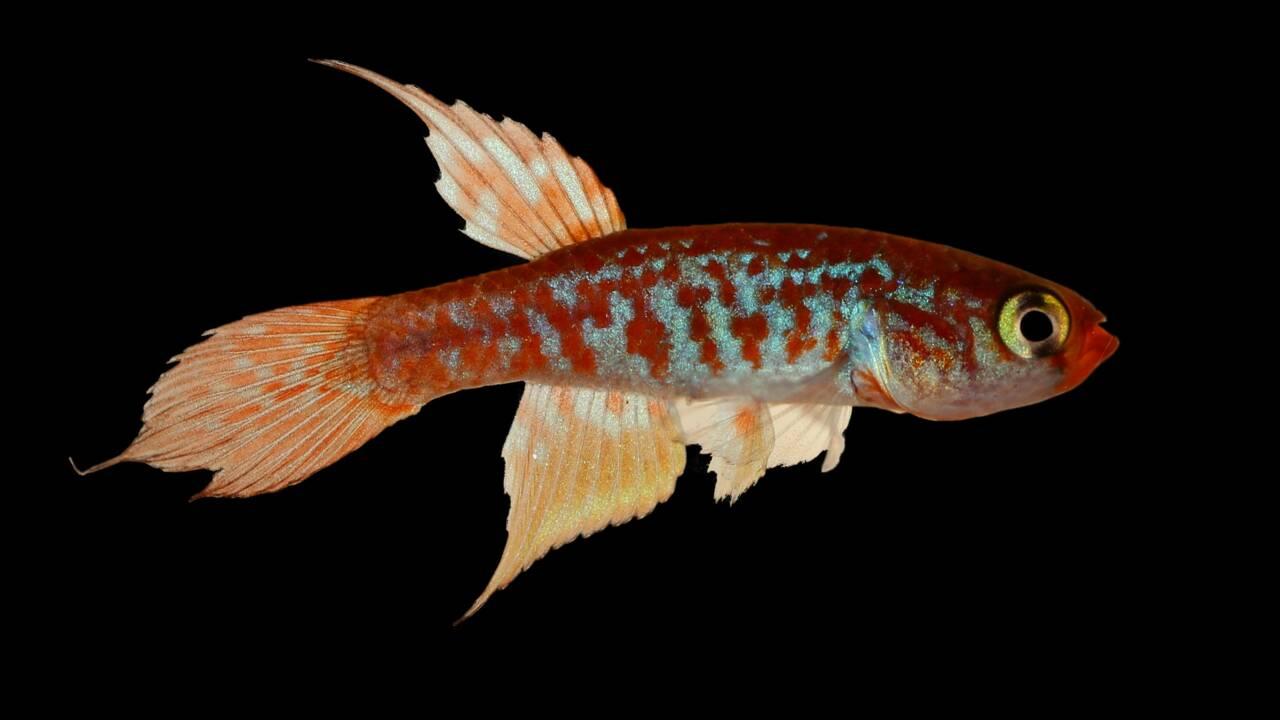 Près de 400 nouvelles espèces découvertes en Amazonie (WWF)