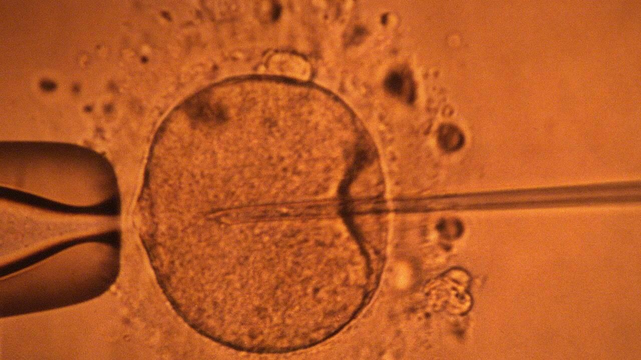 Des ovules humains cultivés jusqu'à maturité en laboratoire