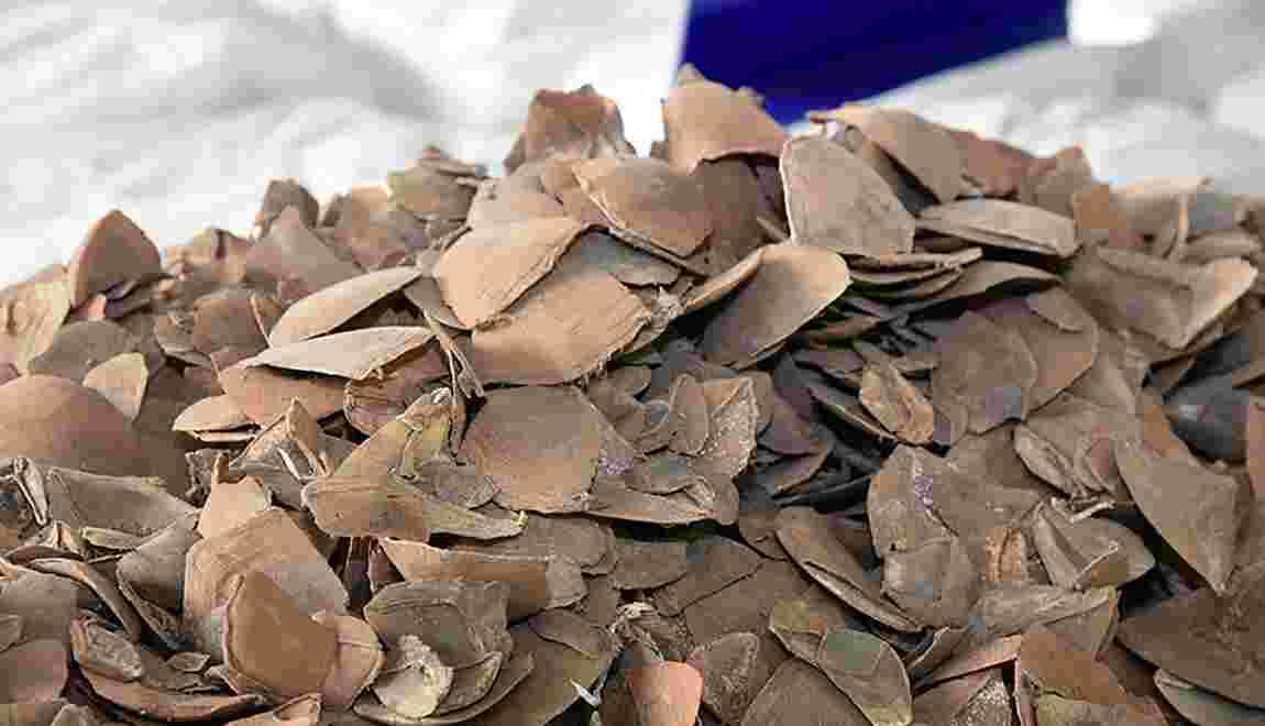 Thaïlande: saisie de près de 3 tonnes d'écailles de pangolin