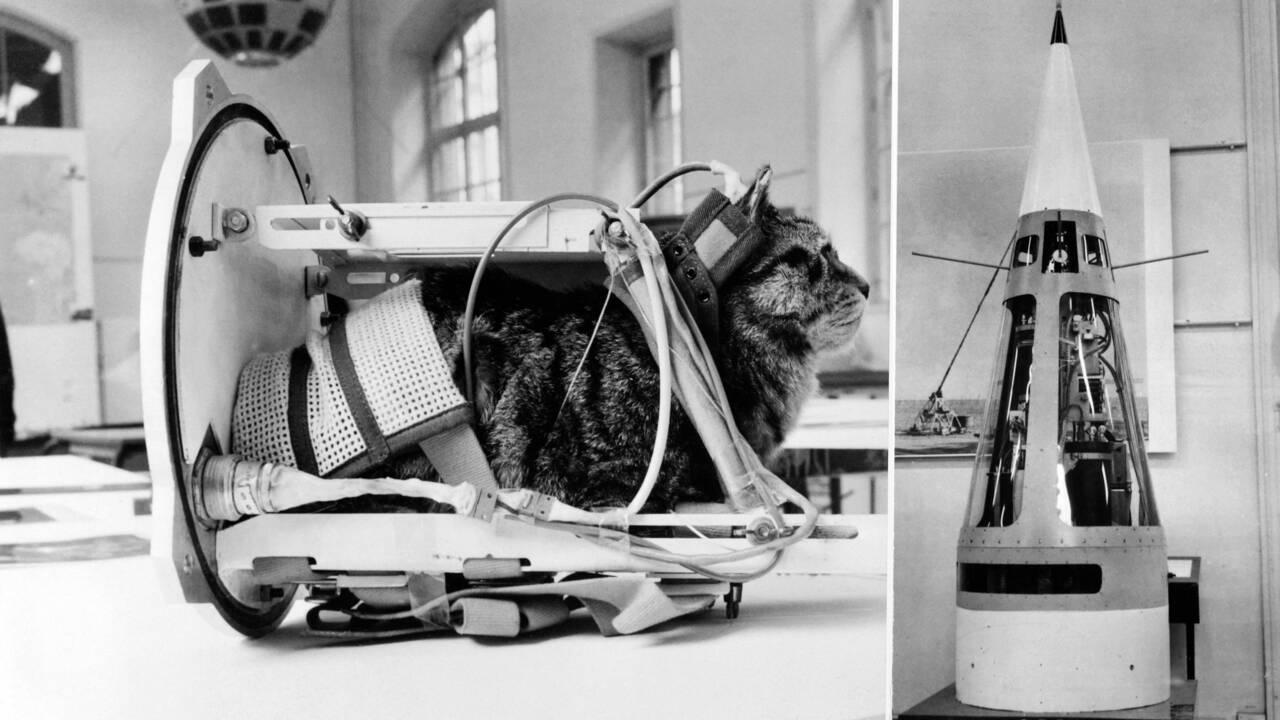 Les animaux, pionniers de la conquête spatiale