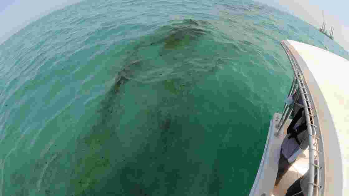 Koweït: le gros d'une marée noire nettoyé