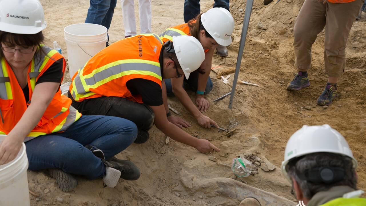Au Colorado, découverte d'un rare fossile de dinosaure