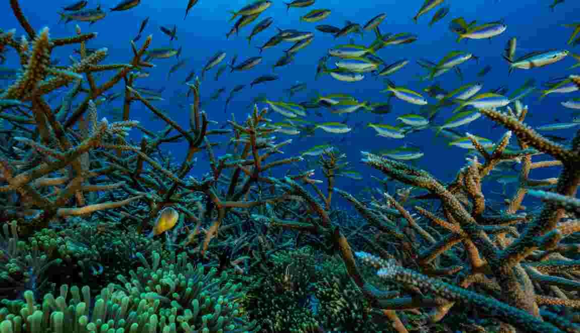 Environnement: 400 heures sous l'eau pour mettre en lumière les coraux