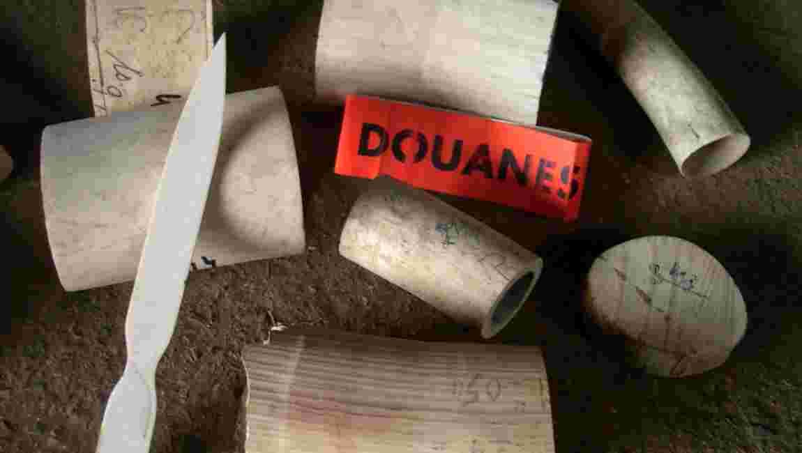 Côte d'Ivoire: saisie d'une tonne d'ivoire et autant d'écailles de pangolin