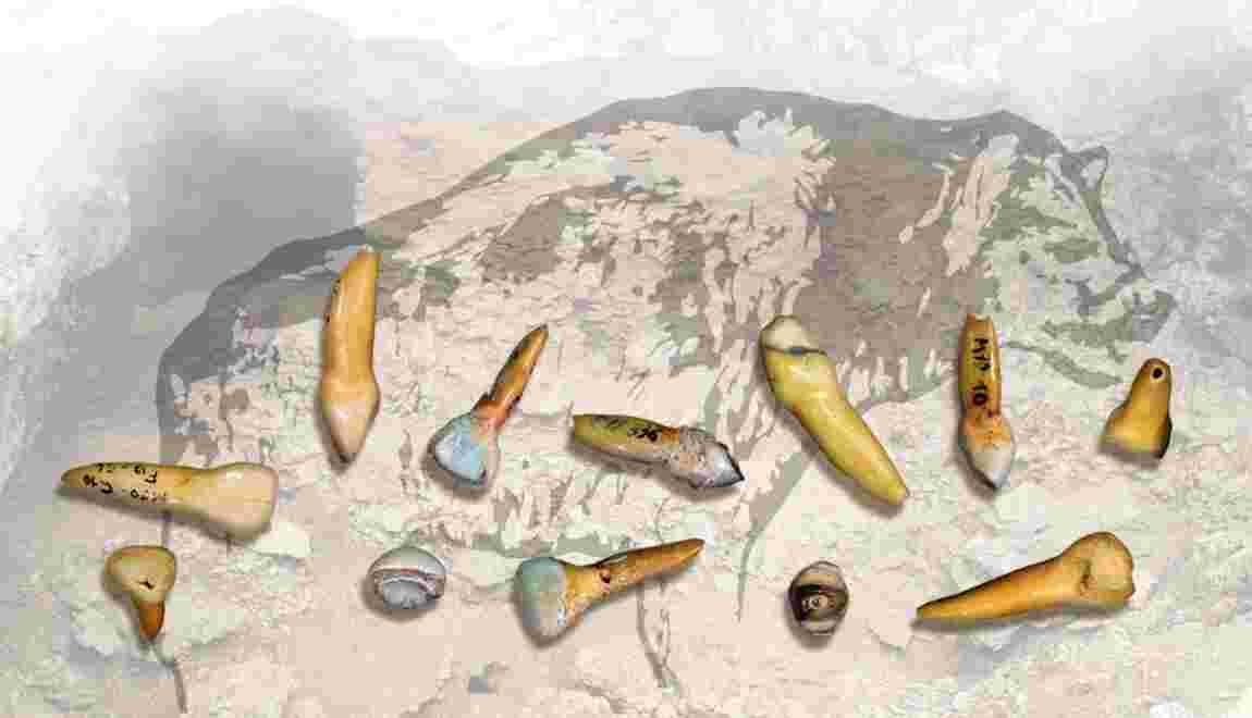 Des dents d'hommes de Néandertal digérées par de grands carnivores