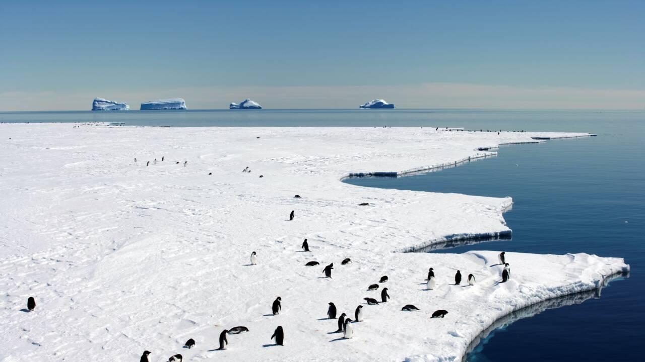 Nouvelles négociations pour un immense sanctuaire marin en Antarctique