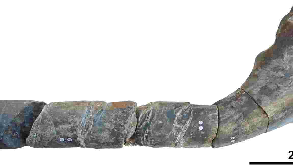 Une mâchoire de 205 millions d'années aurait appartenu à un reptile géant