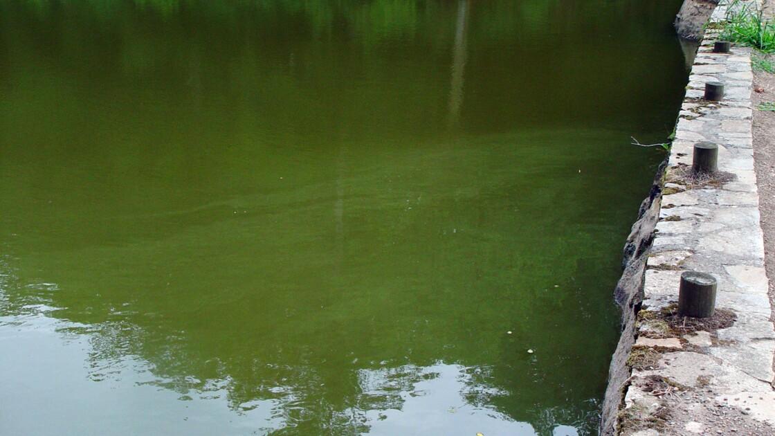 Cyanobactéries/décès de chiens : vigilance étendue à la Vienne, après le Cher et la Loire