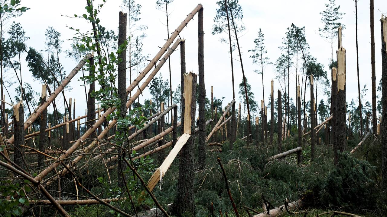 Pologne : des dizaines de milliers d'arbres abattus par des tempêtes