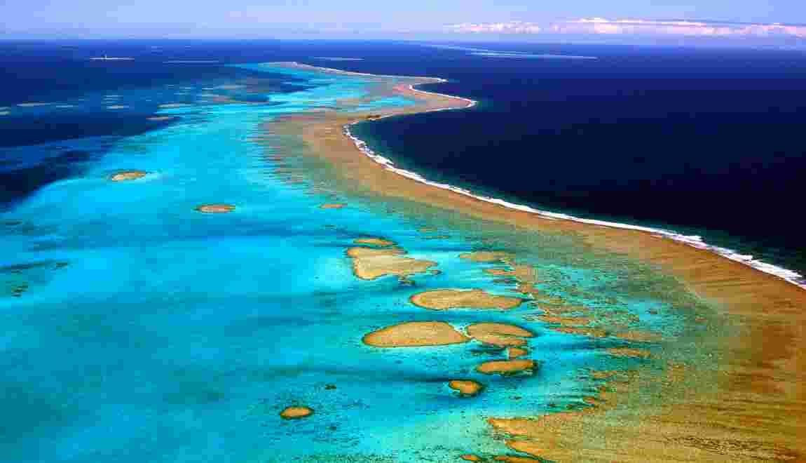 Nouvelle-Calédonie: la plupart des coraux blanchis l'an dernier ont récupéré